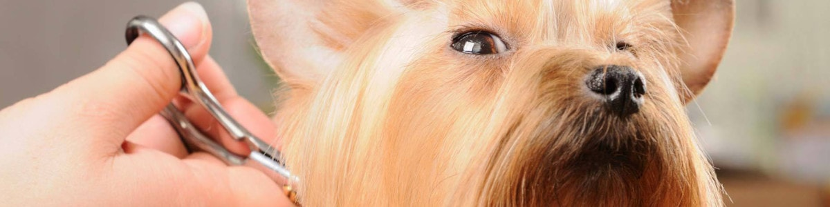 estetica de mascotas en zamora